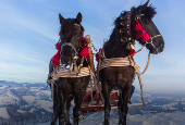 Jasper in January Pyramid Horse Sleigh Rides 2018