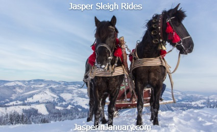Jasper in January 2017 Pyramid Lake Sleigh Rides